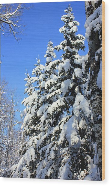 Evergreen Trees In Winter Wood Print