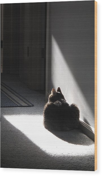 Everybody Needs A Sunny Spot Wood Print