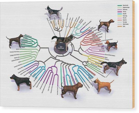 Evolution Of Dog Breeds Wood Print
