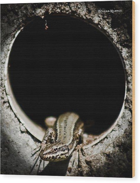 Wood Print featuring the photograph Exit Of Lizard Devil by Stwayne Keubrick
