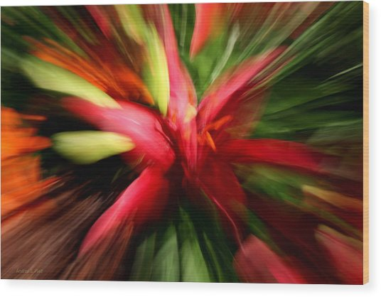 Exploding Lily Wood Print
