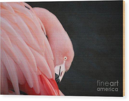 Exquisite Pink Flamingo #5 Wood Print