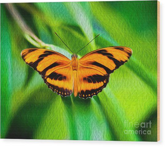 Extended Wings Of The Banded Orange Tiger Heliconian Butterfly  Wood Print