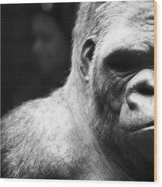 Extreme Close-up Of Gorilla Wood Print by Ali Roshanzamir / Eyeem