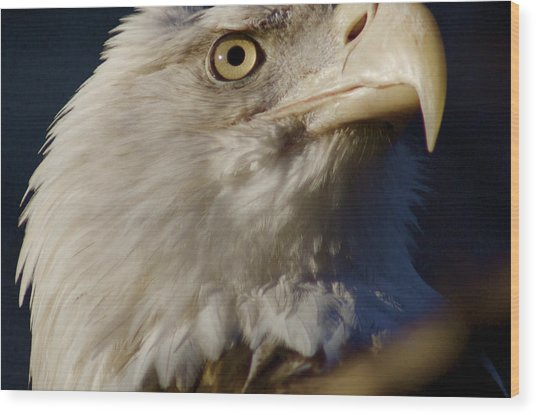 Eye Of The Eagle Wood Print