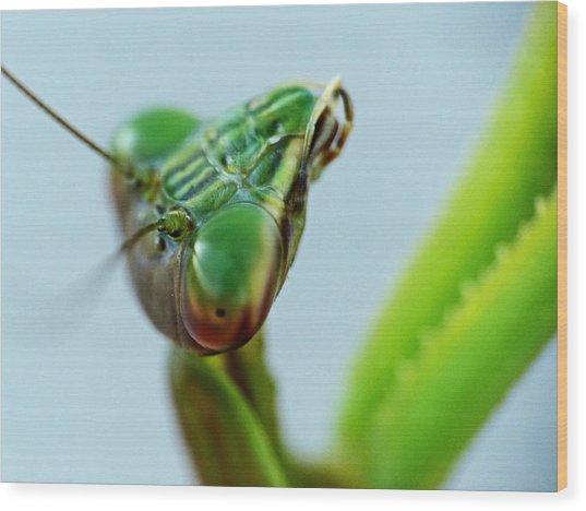 Eye Of The Mantis Wood Print