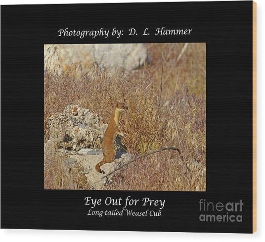 Eye Out For Prey Wood Print by Dennis Hammer