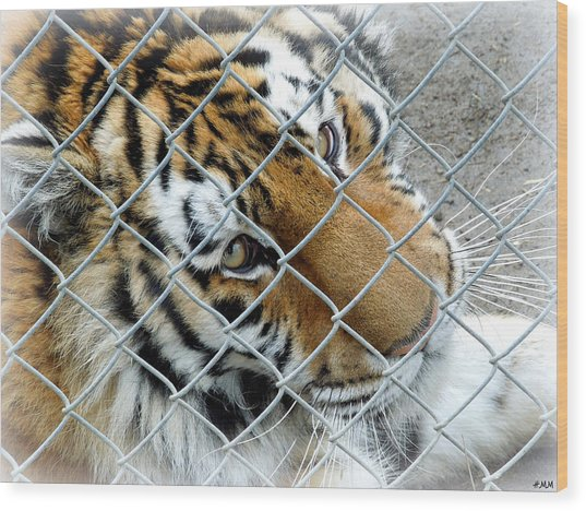 Eyes Of Captivity Wood Print
