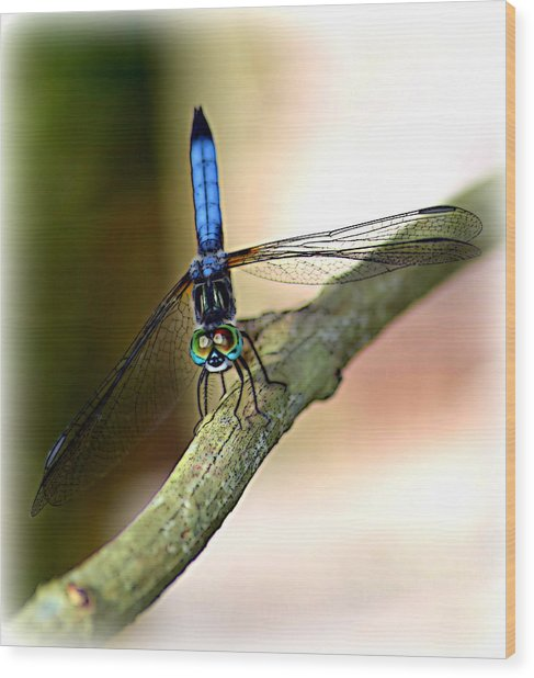 Eyes On You Dragonfly Wood Print by Sheri McLeroy