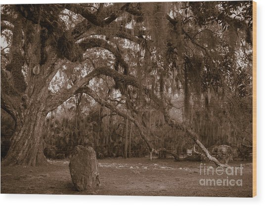 Fairchild Oak Wood Print