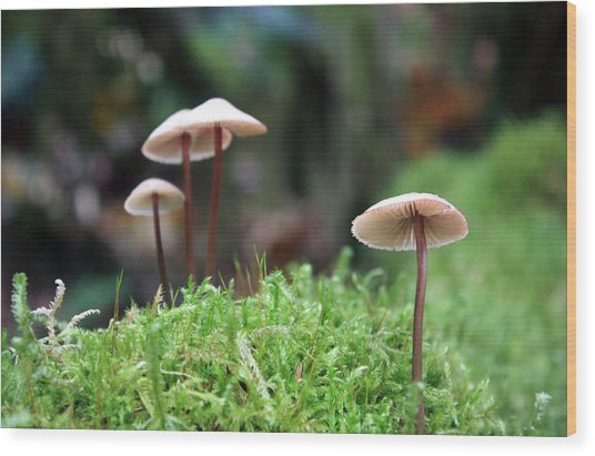 Fairy Bonnets Wood Print