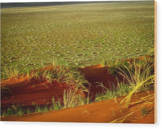 Fairy Circles Wood Print