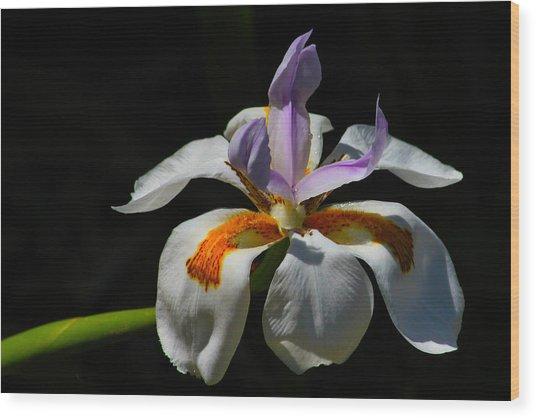 Fairy Iris Wood Print