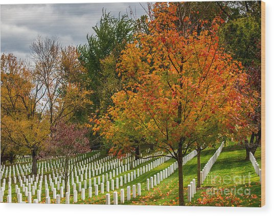 Fall Arlington National Cemetery  Wood Print