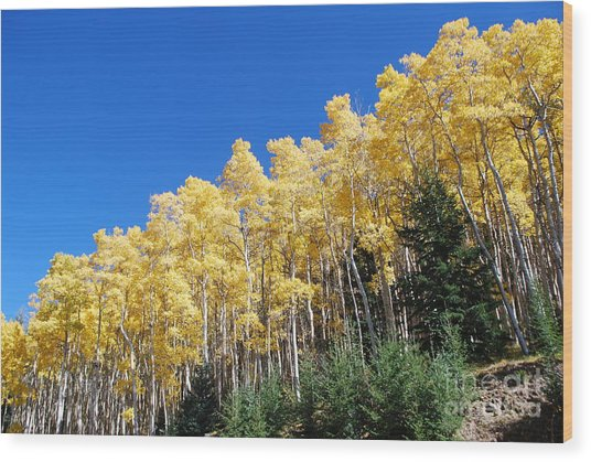 Fall Aspens Of New Mexico Wood Print