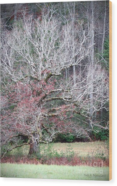 Fall At Cades Cove Wood Print