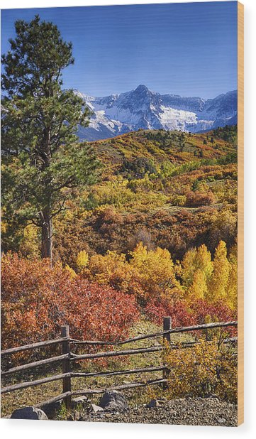 Fall At Dallas Divide Wood Print