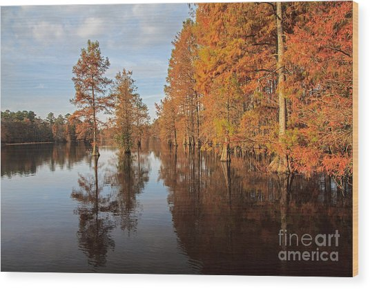 Fall At Trap Pond Wood Print