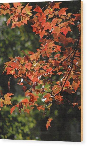 Autumn's Best Wood Print by Les Scarborough