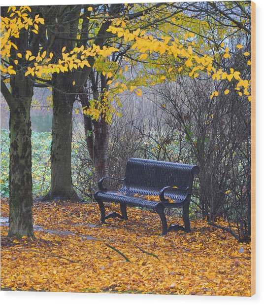 Fall Bench Wood Print