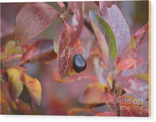 Fall Berry Wood Print