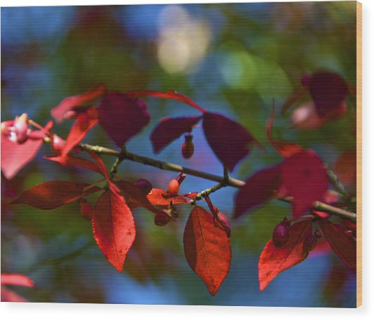 Fall Bokeh Wood Print