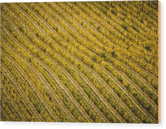 Fall Color Grape Vines Wood Print by Connie Cooper-Edwards