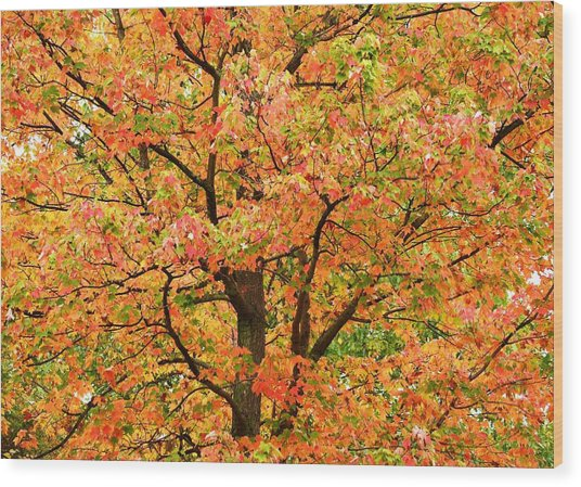 Fall Color Palette Wood Print by Judy Genovese