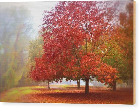 Fall Colored Trees Wood Print