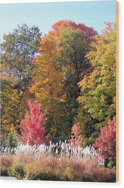 Fall Colors Wood Print by Gaetano Salerno