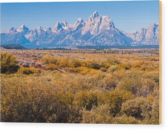 Fall Colors In The Tetons   Wood Print