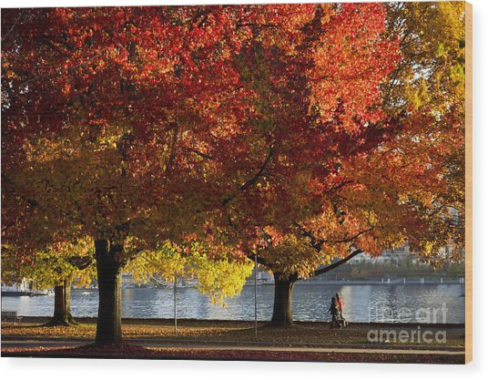 Fall Colour In Stanley Park Wood Print
