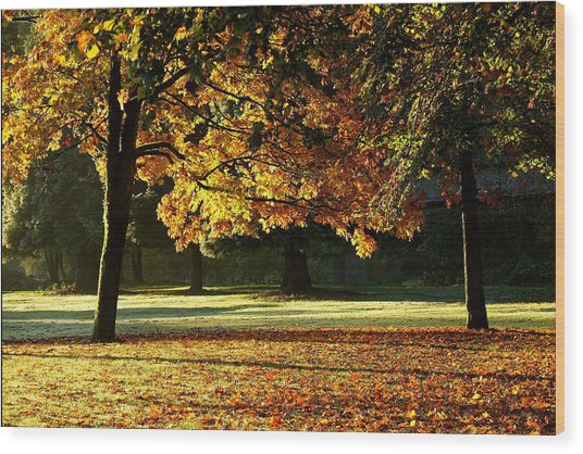 Fall Colours Wood Print