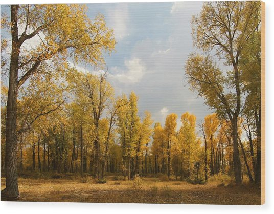 Fall Cottonwoods In Gros Ventre Wood Print