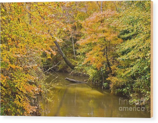 Fall Creek Foliage Wood Print