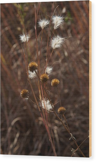 Fall Feathers Wood Print