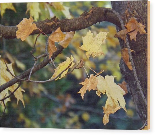 Fall Foilage Wood Print