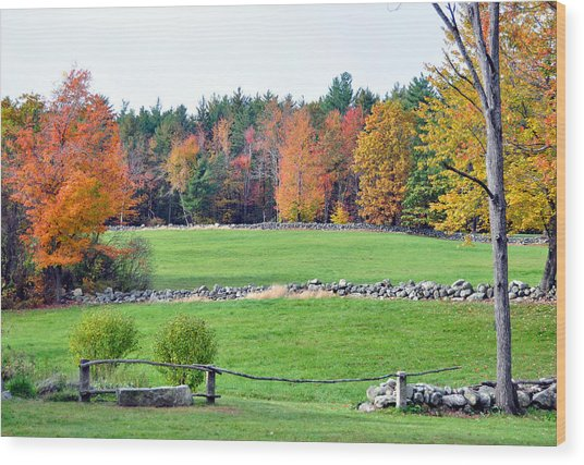 Fall Foliage 6 Wood Print