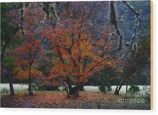 Fall Foliage At Lost Maples State Park  Wood Print