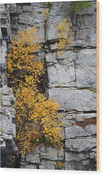 Fall Foliage Colors 01 Wood Print