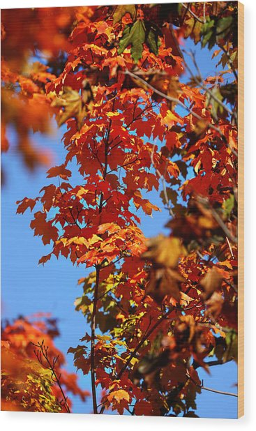 Fall Foliage Colors 15 Wood Print