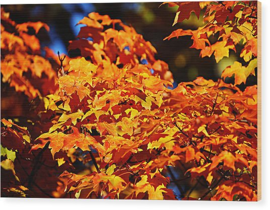 Fall Foliage Colors 16 Wood Print