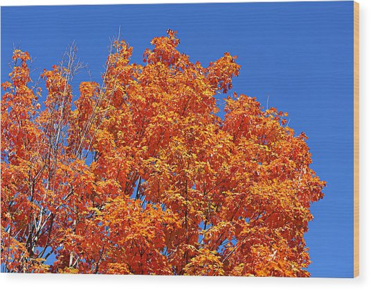 Fall Foliage Colors 19 Wood Print