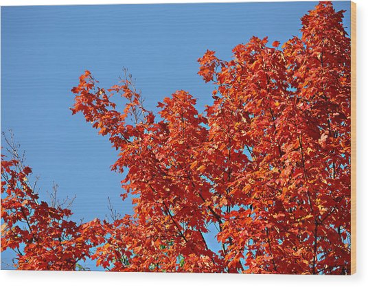 Fall Foliage Colors 20 Wood Print