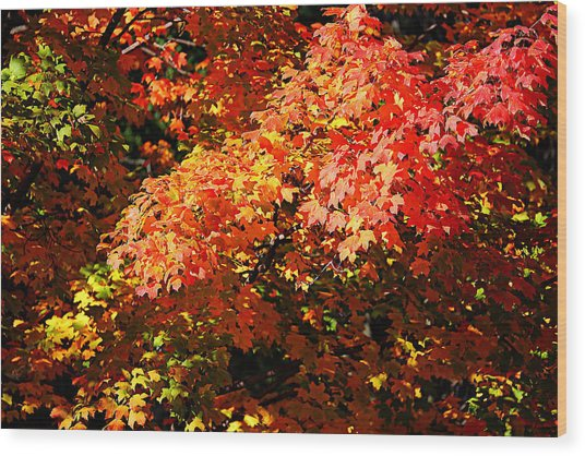 Fall Foliage Colors 21 Wood Print