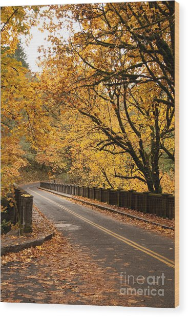 Fall Foliage On The Highway Wood Print by Cari Gesch