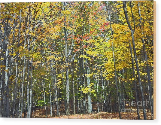 Fall Forest Mm Wood Print