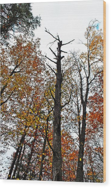 Fall Forrest Wood Print by Stephanie Grooms