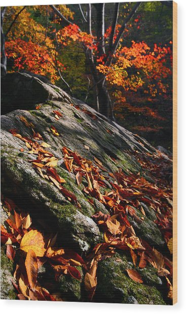 Fall In Gyeryongsan Wood Print