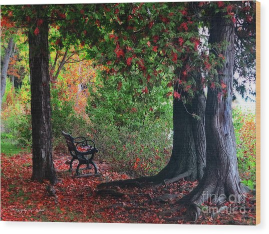 Fall In Henes Park Wood Print